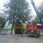 Robert Bruijn Verreiker Verhuur boomverzorging