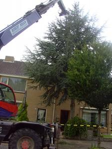 Robert Bruijn boomverzorging